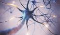 What is Transcutaneous Auricular Vagus Nerve Stimulation?